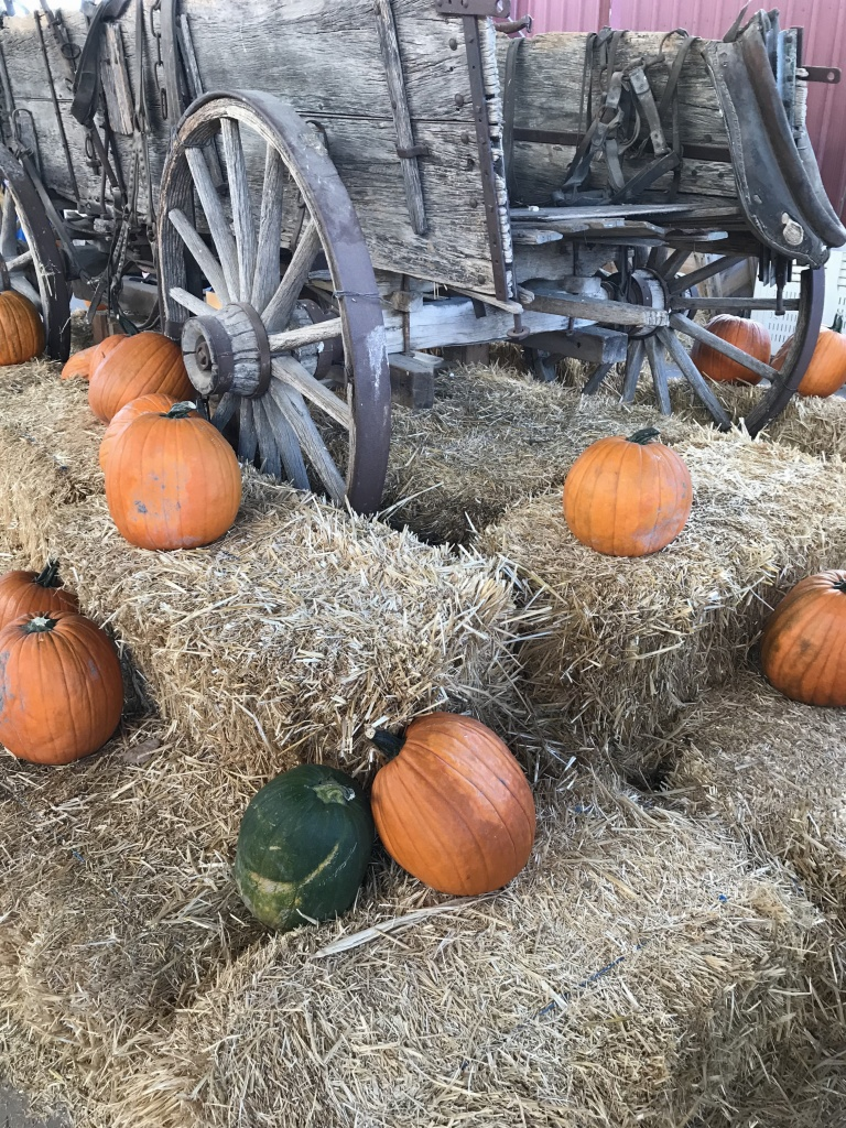 pumpkins, hay bails and old wagon